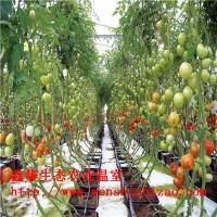 定制安装阳台水培无土栽培设备 平铺式水培蔬菜技术 上门安装