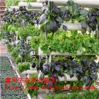 现货批发 种植海绵 无土栽培棉 无土瓜果种植桶 阳台水培设备