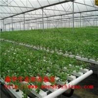 批发阳台式栽培无土栽培设备 高产水培种植营养液栽培家庭园艺
